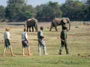 Visit Zambia walking safari